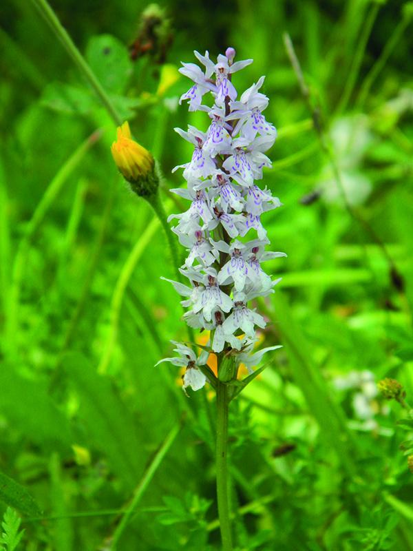 Nouvel Inventaire de Biodiversité Communale à Lèves par Eure-et-Loir Nature