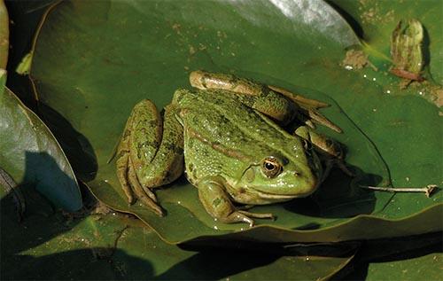 Consultation publique – Reptiles et amphibiens