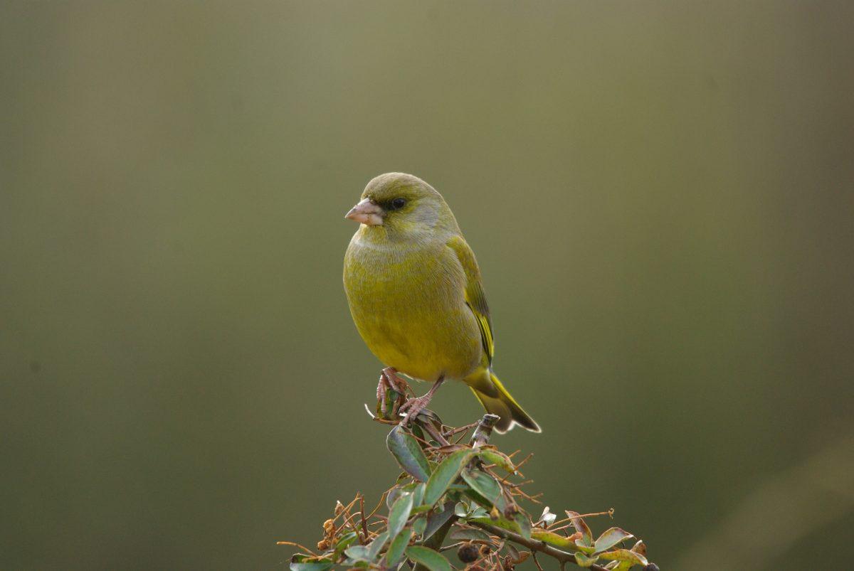 Le nourrissage des oiseaux en hiver – Recommandations