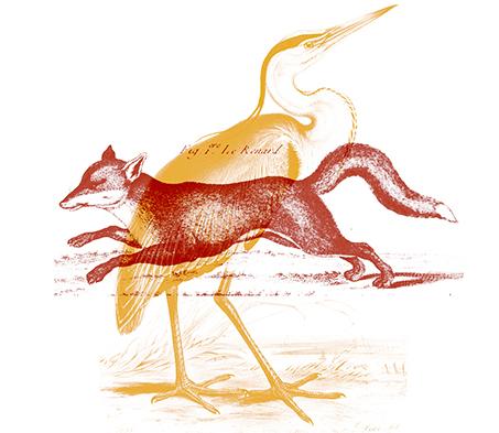 Rencontre des groupes «ornitho» et «mammifères» en janvier