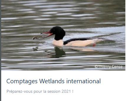 Comptages Wetlands international : la session 2021 arrive mi-janvier