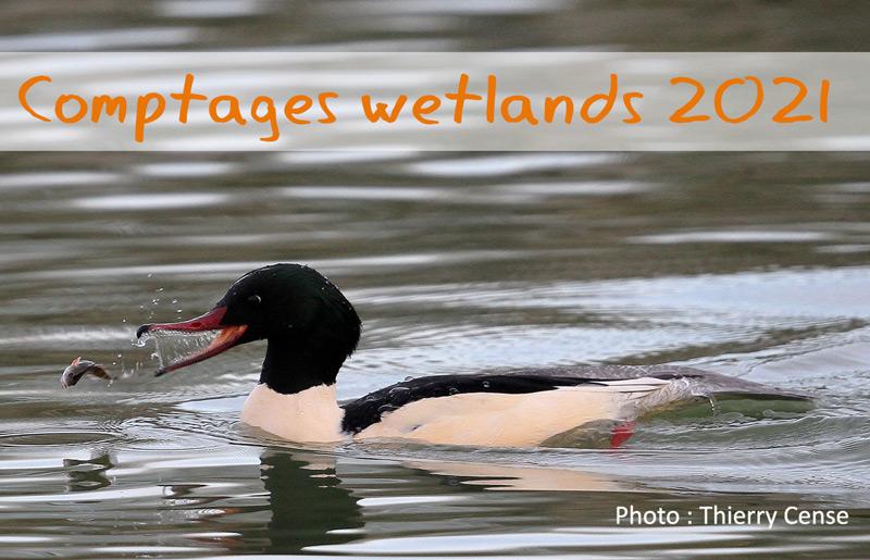 Synthèse des comptages Wetlands 2021 en Eure-et-Loir
